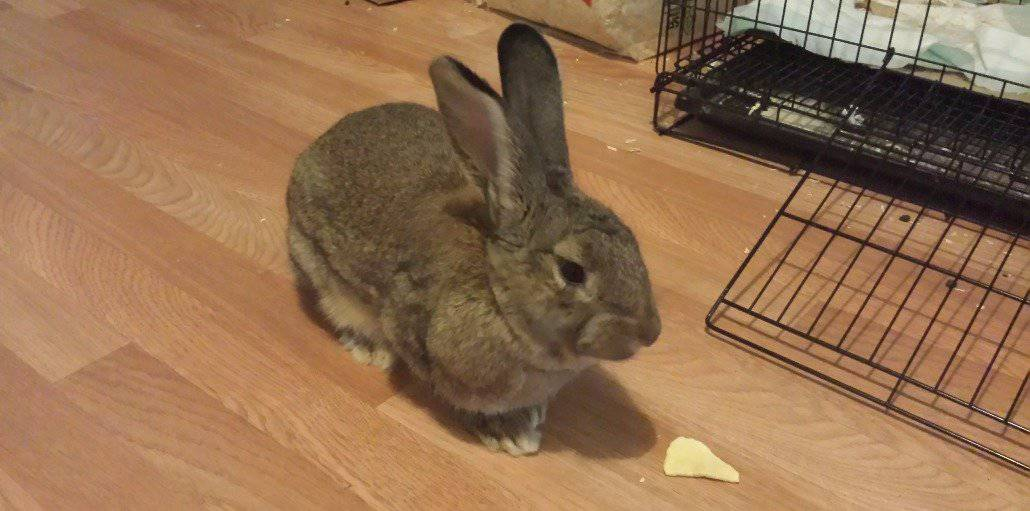 Pet Rabbit Emotional Support for Severe Depression Our son Darrell has severe depression with some psychosis and is often plagued with suicidal thoughts.  Pepper, our pet rabbit, brings comfort and love to Darrell lessening the effects of depression.