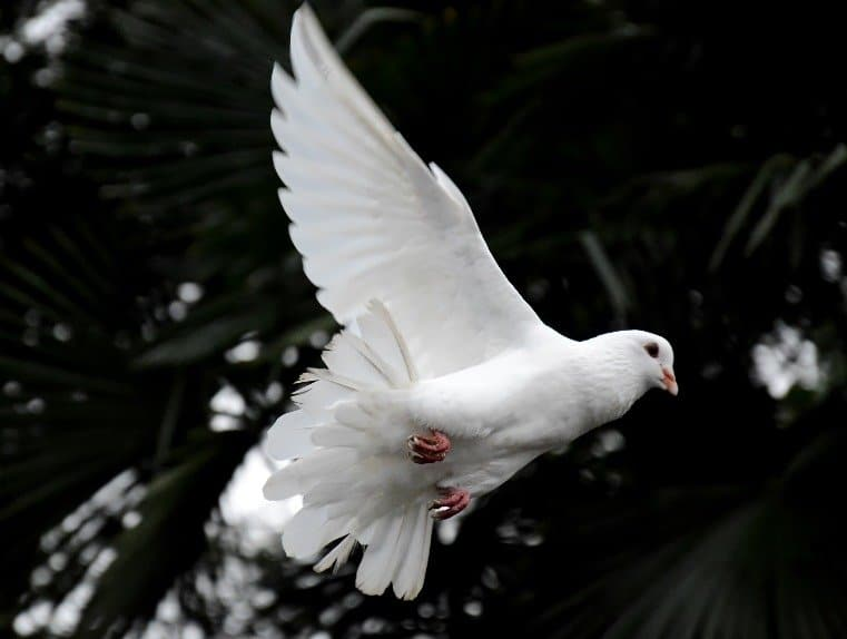 Revelations are received from God's mind or the Holy Spirit. When we receive God's revelations through his Holy Spirit, we are receiving theHoly Ghost. We are connecting to heaven with the hope to receive many wonderful gifts.
