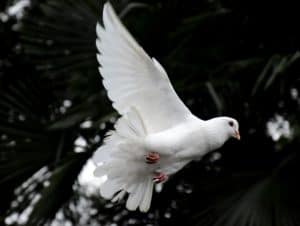 God is no respecter of persons. All mankind can receive the Holy Ghost through humility without receiving an ordinance.