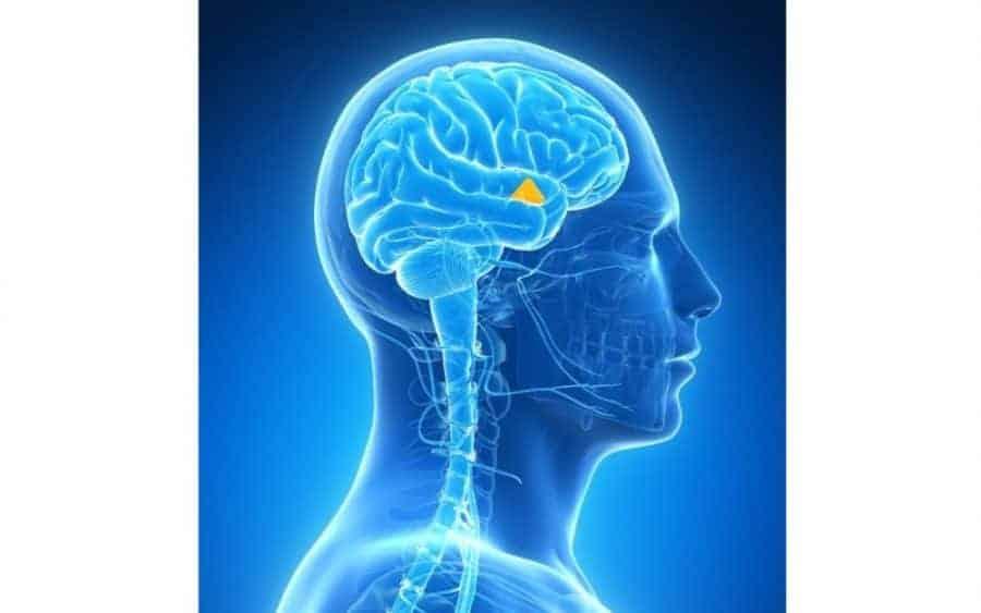 Negative Entities – Understanding Mindset of Dark Beings