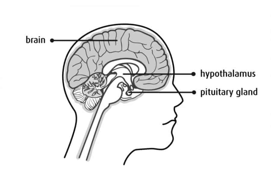 As I was looking at the location of the hypothalamus and pituitary glands, located in the middle of the brain behind the eyes, I noticed this is the main area negative entities attack.
