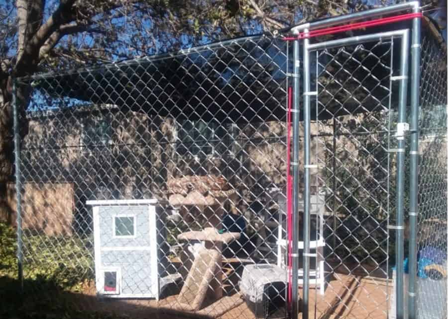 Dog Kennel For Cat  – Indoor Cat Not Possible